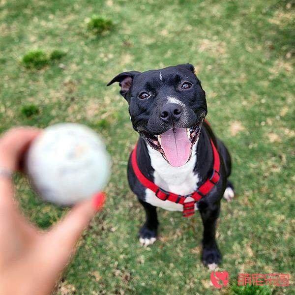 逗狗狗开心的方法都有哪些